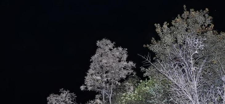 Foto de árvores que parecem rendadas, em contraste com céu negro. No primeiro plano, do lado esquerdo há galhos sem folhas