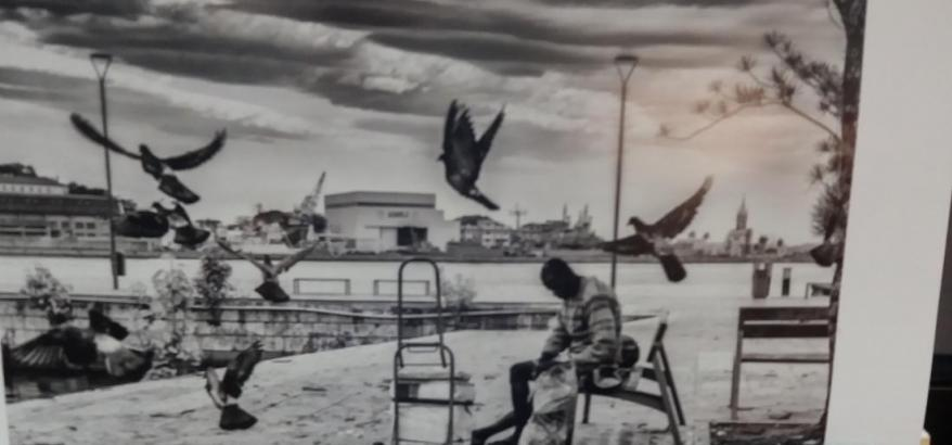"Foto ""Paz"" - Wander Rocha"